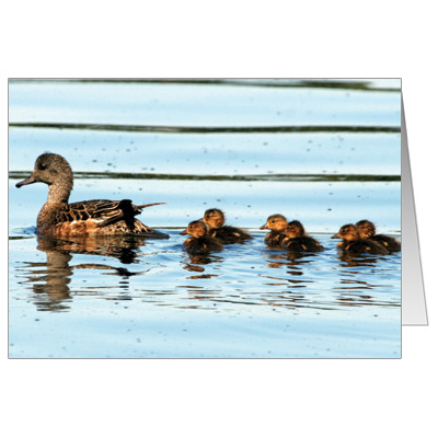 belonging duck and page Essays - largest database of quality sample essays and research papers on the rabbits belonging.
